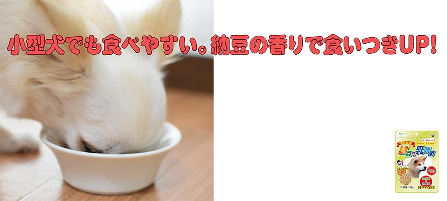 納豆×乳酸菌(犬用) 40g×1袋