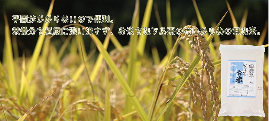 かもめのお米(無洗米) 5kg×1袋