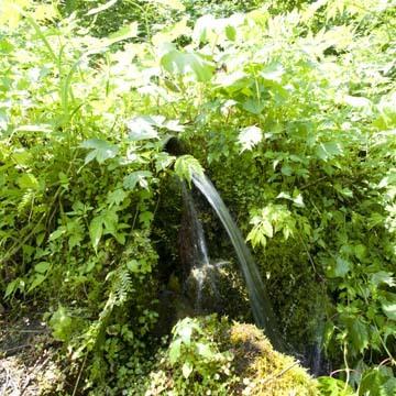 『ブナの水音』の水源へ