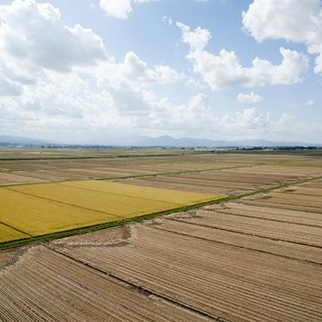 田んぼはほぼ収穫を終え、茶色い土を見せていました。